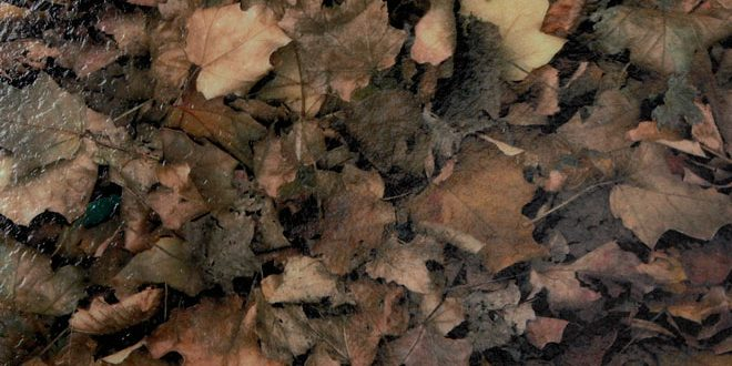 IM7011-Autumn-Leaves-NEW